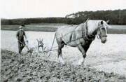 How Tractors Replaced Horses – Antique Tractor Blog